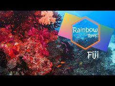 Rainbow Reef - Fiji - YouTube Fiji Islands, Highlights, The Creator, Rainbow, Youtube, Fiji, Round Trip, Viajes, Rain Bow