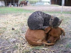 Cats sleeping in odd places. - Imgur