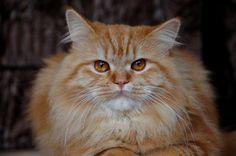 How to Clean With Vinegar  Water for Cat Urine Smells