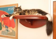 Cats shelves are a space savvy enrichment solution.  AnimalBehaviorist.us offers the shelves (and installation packages for New Yorkers).