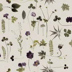 Emma von Brömssen Botanica Tapet