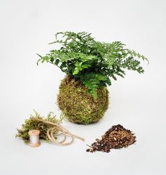 """Some of the materials and the final product from our Kokedama Kit - it contains everything you need to make your own Kokedama (""""string garden"""") at home!"""