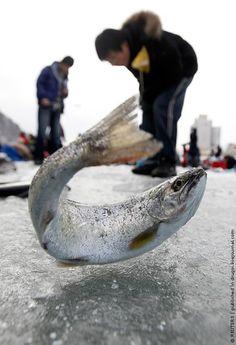 Ice Fishing Festival, South Korea