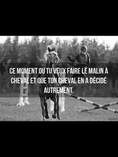 Quote More Citation Plus - Art Of Equitation Equestrian Quotes, Funny Horses, Horse Photography, Cool Items, Horse Riding, Cute Animals, Jokes, Love You, Lol