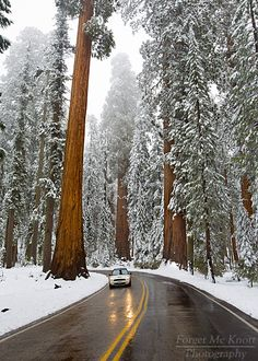 Generals Highway in Sequoia National Park, California during the winter