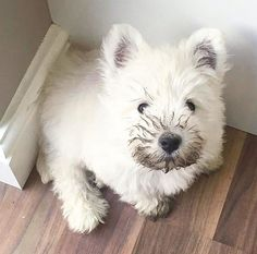 I didn't play in the mud....