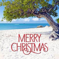 Merry Christmas from Florida! Merry Christmas Quotes, Christmas Bells, Christmas Love, Christmas Greetings, Christmas And New Year, Christmas Phrases, Caribbean Christmas, Tropical Christmas, Beach Quotes