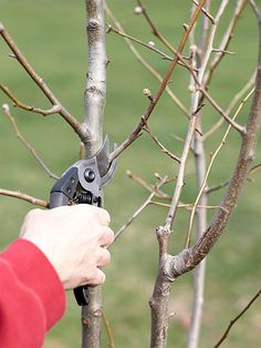 11.Prune Summer-Flowering Shrubs  Early Spring  If any of your summer-blooming shrubs, such as butterfly bush, potentilla, and summersweet, are getting out of hand, give them a haircut in early spring. This won't affect their blooms because they make their flowers on new growth.