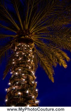 #palm #tree #light #night #blue #green #city #myphotocouture