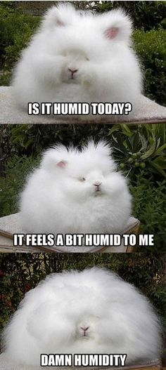 Humid? This is me every time I go East of the Mississippi River....