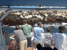 Simon's Town Boat Company | Seal Viewing Trips | Cape Town - Dirty Boots Beautiful Beaches, Most Beautiful, Boat Companies, At Close Range, Table Mountain, Picture Postcards, Adventure Activities, Stunning View, Cape Town