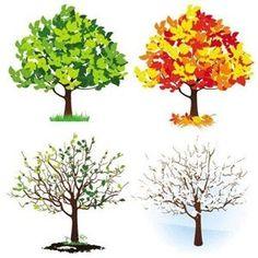الحياة فصول مثل الشجرة - مجلة مغربيات