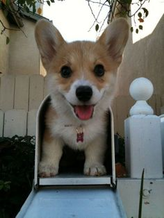 How to save the postal service: More corgi puppies.