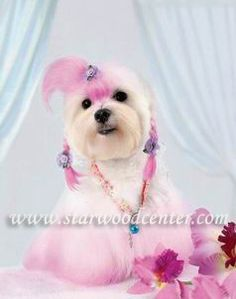 581 Best Creative Dog Grooming Images Creative Grooming Dog