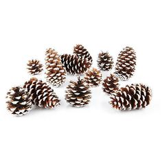 """S/24 5"""" Sparkle-Tipped Cones ($25) ❤ liked on Polyvore featuring home, home decor, christmas, fillers, winter, backgrounds, item, pine cone home decor, christmas home decor and winter centerpieces"""