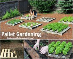 Pallet Gardening!