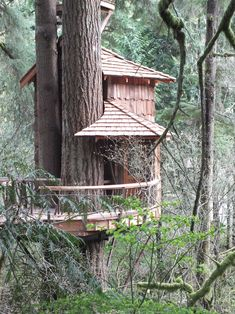 Pete Nelson's Tree Houses