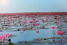 Nong Han Lake Udon Thani