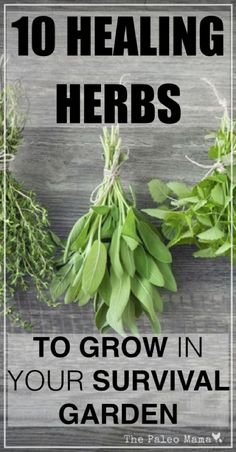 10 Natural Healing Herbs To Grow In Your Survival Garden.feverfew, sage, Thyme, Rosemary, Peppermint, Lavender, Lemon Balm, Parsley, Chamomile, Basil,