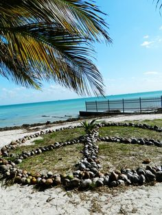 Peace sign made out of coconuts - Fort Zachary Taylor Park, Key West.