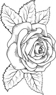 I am a professional graphics designer and have experience of more than 5 years. So can assure the most satisfying work professionally. Outline Drawings, Pencil Art Drawings, Art Drawings Sketches, Tattoo Outline Drawing, Tattoo Drawings, Tattoos, Rose Drawings, Rose Coloring Pages, Leaf Coloring Page