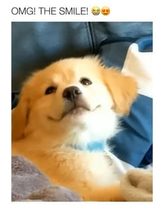 Cute Funny Dogs, Cute Funny Animals, Cute Cats, Cute Jokes, Stupid Jokes, Funny Cats And Dogs, Good Jokes, Wtf Funny, Cute Animal Videos