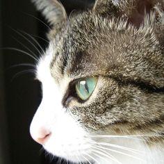 #instagramcats #catsagram #petstagram #catlover #instacat #catoftheday #instagood0 #catsofinstagram #mycat #cat #猫 #ねこ