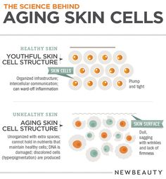 The Science Behind Aging Skin Cells.  At Timeless Skin Solutions we are able to restore the skin's youthful structure with advanced skin care treatments & products.