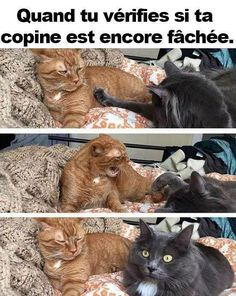 Caturday Is Finally Here Along With 26 Amazing Cat Memes! - World's largest collection of cat memes and other animals Funny Animal Jokes, Funny Cat Memes, Cute Funny Animals, Funny Animal Pictures, Funny Relatable Memes, Stupid Funny, Funny Cute, Cute Cats, Gf Memes