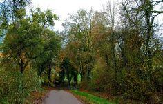 Auch an trüben Novembertagen, ... findet man noch Farben in der Natur. Auch in der Nachbarschaft. Sogar viele. Man muss nur genau hinschauen. :-)