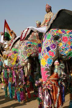Elephant Festival Jaipur #travelnewhorizons