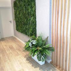 Biała donica z egzotyczną kompozycją z zieleni Plants, Planters, Plant, Planting
