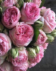 """shared this photo of Bridal Piano and says: """"I'm not obsessed with these at all. D Flowers, Luxury Flowers, Growing Flowers, Pretty Flowers, Planting Flowers, Pink Piano, Peony Painting, Flower Aesthetic, Pink Peonies"""