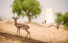 Gazel © Banyan Tree Hotels & Resorts