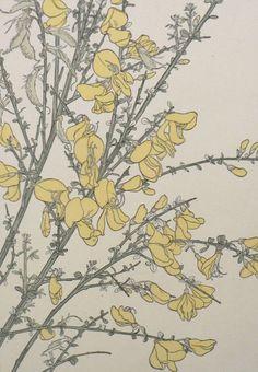 Forsythia by Jeannie Foord ▫ Decorative Flower Studies Series / Pochoir Prints ▫ 1904