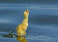 Funny Animal Pictures - View our collection of cute and funny pet videos and pics. New funny animal pictures and videos submitted daily. Cute Little Animals, Baby Animals, Funny Animals, Beautiful Birds, Animals Beautiful, Photo Animaliere, Shot Photo, Perfectly Timed Photos, Baby Ducks