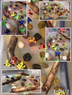 Frogs in the water tray with pebbles & large sticks