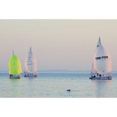 Erst eine Woche her und wirkt wie eine Fata Morgana: Mittwochsregatta in Middelfart mit Tümmlern #segeln #summer2016 #ostsee #middelfart #visitdenmark #sailing #dieseekocht