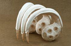 Främmande objekt som föreställer framtidens cellulosa.    Paper Creature By Bronwyn Oliver