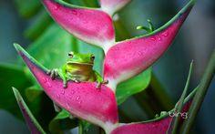 Bing Frog Wallpaper
