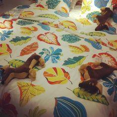 Perritos durmiendo en una cama de #IKEA  #pelucheando #peluches #softtoys #plush #instatoys #sleepy #dogs #perros #puppies
