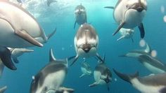 So Good You'll Think It's CGI: Underwater Camera Captures Jaw-Dropping Footage of Wild Dolphins - video: Mark Peters - vimeo : takepart Carp Fishing Bait, Saltwater Fishing, Fishing Boats, Argentine Buenos Aires, Life Aquatic, Fishing Techniques, Fishing Guide, Science Photos, Jolie Photo