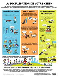 Conseil : Éducation, la socialisation Can Dogs Eat Corn, How To Cook Brats, Dog Poster, Citrus Oil, Benadryl For Cats, Cooking Lobster Tails, Discount Dog Food, Dog Eating, Dog Teeth