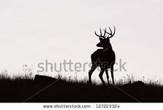 Whitetail Buck Deer Stag, black & white silhouette, Midwestern Deer Hunting the Midwest by Tom Reichner, via ShutterStock