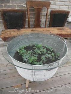 a living table--terrarium Garden Coffee Table, Outdoor Coffee Tables, Patio Table, Terrarium, Outdoor Fun, Outdoor Decor, Outdoor Ideas, Wash Tubs, Patio Design