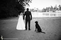 www.darshanphotography.com Pet Boarding, Vancouver Island, Pet Grooming, Photographers, Dog Cat, Wedding Photography, Ocean, River, Teaching