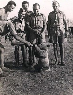 Fed with fruit, marmalade, honey and syrup, and often rewarded with beer. He also enjoyed smoking and eating cigarettes. Wojtek Bear, Poland Ww2, Animal Heros, Wild Animals Photos, Animal Magic, Historical Maps, Military History, Vintage Photographs, Old Pictures