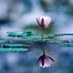 Look in the mirror and see your sacred Self.Be the mirror that others might see their sacred Selves as well Namaste, Bokeh Photography, All Nature, True Nature, Amazing Nature, Thing 1, Cs Lewis, Abraham Hicks, Water Plants