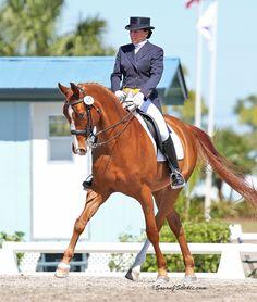 The American Hanoverian Society Dressage Horses, Award Winner, Cross Country, Equestrian, Awards, American, Animals, Animales, Cross Country Running