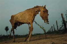 This is a disturbing image of a dead horse. I'm guessing it's propped up against the tree in the background.